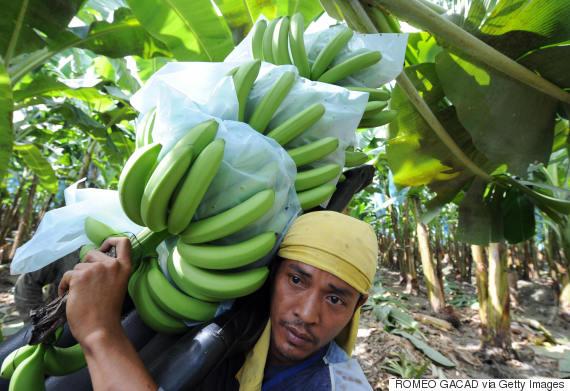 banana mindanao