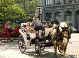 Pas de calèches dans le Vieux-Montréal cet été (VIDÉO)