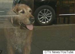 Beloved B.C. Dog That Sat Outside Store For Years Now Stuck Indoors