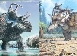 Ces deux nouveaux dinosaures ont des cornes bien particulières