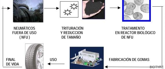 ciclo bacteria biotyre