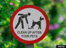Don't Let The Poop Dry: Why You Should Scoop Fido's Feces While It's Still Fresh