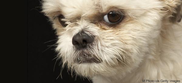 Il tuo cane sa quando sei arrabbiato con lui (e non si fida affatto di te in quei momenti)