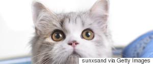 CAT CARRY CUTE
