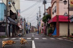 Two dogs in Okuma's empty streets