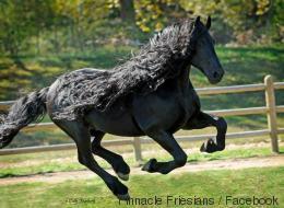Ce cheval a sûrement la plus belle crinière du monde (PHOTOS)