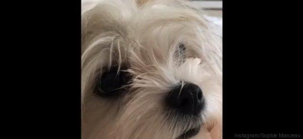 Sophie Marceau présente Lee-tchi, son chien adopté à la SPA