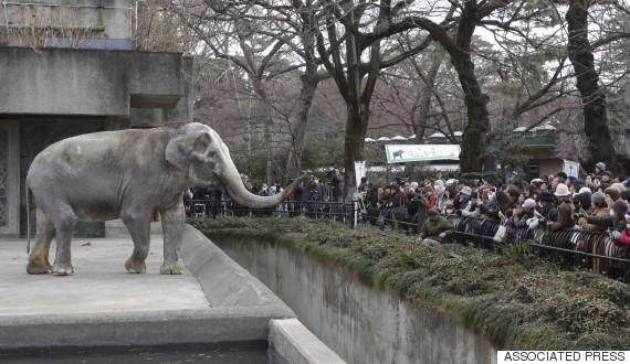 hanako elephant