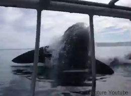 Ces plongeurs ont une peur bleue face à un énorme requin blanc (VIDÉO)
