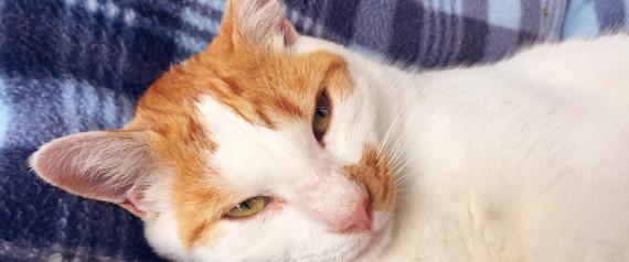 CAT SMARTPHONE