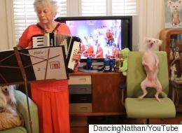 Hairless Dog Dancing To Polka Will Make You Forget It's Monday