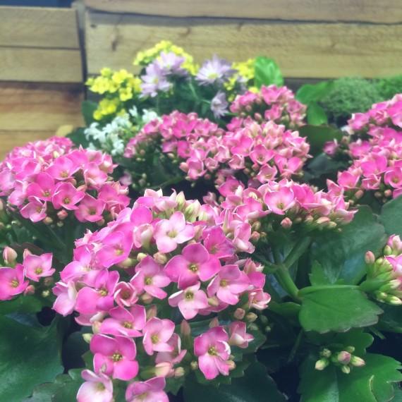 plantes intérieur robustes