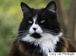 What Your Cat Would Love To Tell You If He Could Talk
