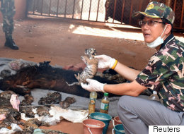 Thaïlande: 40 bébés tigres trouvés dans un congélateur