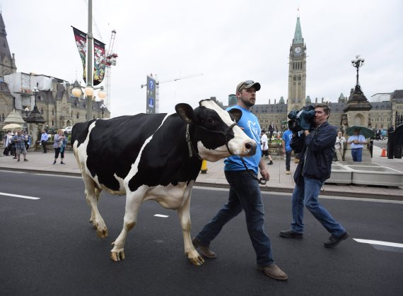 dairy protest