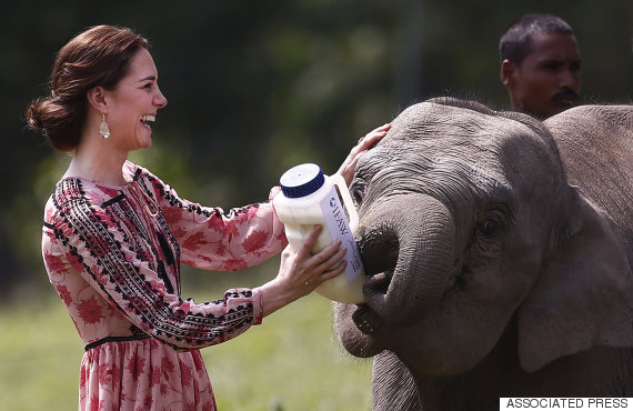 kate middleton elephant