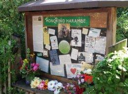 Le gorille abattu a droit à un mémorial dans son zoo