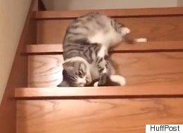 Ces chats qui pensent qu'ils sont des «slinkys»