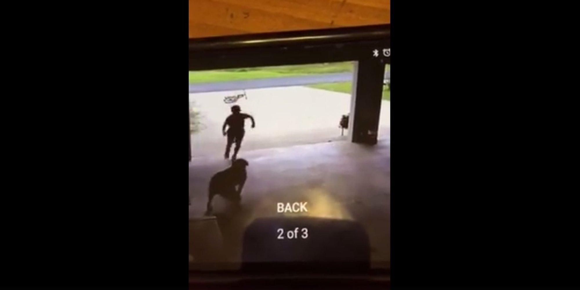 un enfant surpris en train de courir chez ses voisins pour faire un c lin au chien. Black Bedroom Furniture Sets. Home Design Ideas