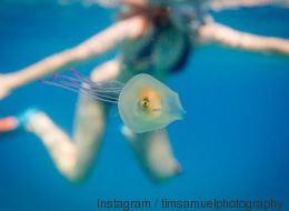 Une poisson-méduse? Non, il est piégé dans une méduse (PHOTOS)