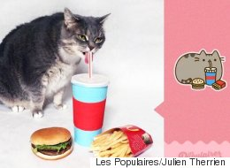 Sa chatte «obèse» imite le populaire Pusheen