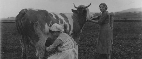 COW MILKING WOMAN