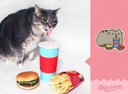 Recrea con su gata los famosos emoticonos de Facebook