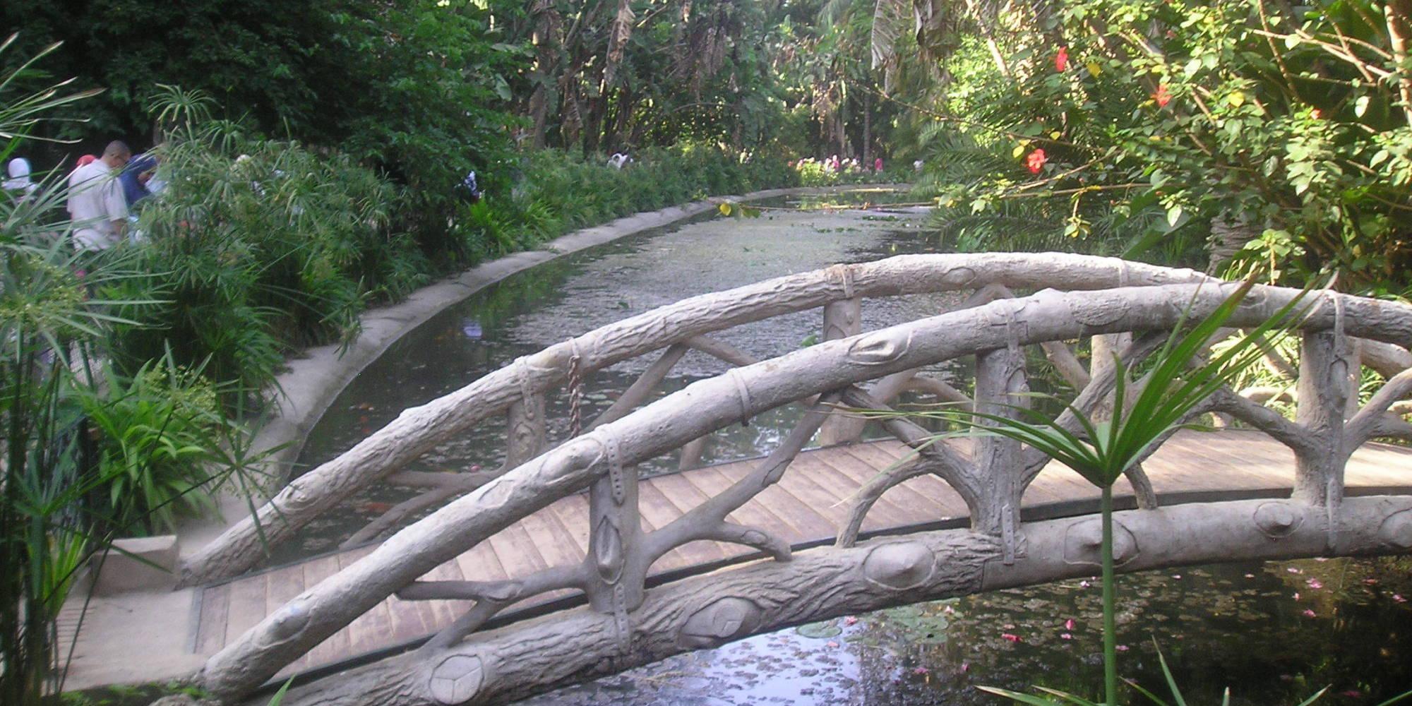 Le jardin d 39 essai d 39 alger un lieu magique achour mihoubi for Jardin olof palme alger