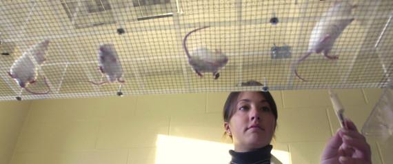 RATS ANIMAL TEST