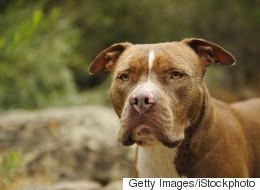 Montréal souhaite faire appel de la suspension du règlement sur les pitbulls