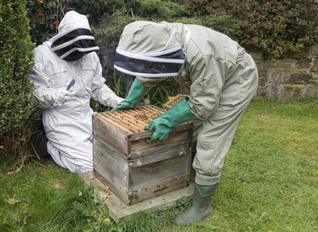 si vous voulez installer une ruche au fond de votre jardin. Black Bedroom Furniture Sets. Home Design Ideas