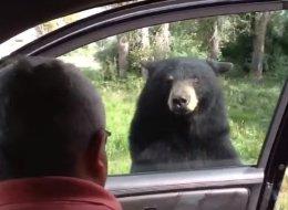 Cet ours terrifie une famille en ouvrant la porte de leur voiture (VIDÉO)