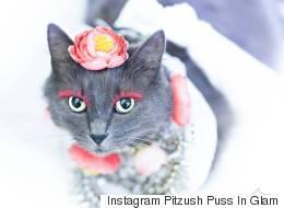 Ce chat avec des faux-cils est la vedette d'Instagram