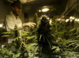 Cannabis - eine Betrachtung