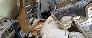 WEST VANCOUVER BLACK BEAR DAMAGES CAR