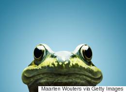 Une femme trouve des dizaines de grenouilles dans sa toilette