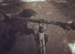 Ce cycliste percute un ours en pleine forêt