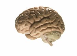 Les personnes les plus éduquées ont mystérieusement plus de cancer du cerveau