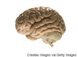 Les personnes les plus éduquées ont plus de cancer du cerveau