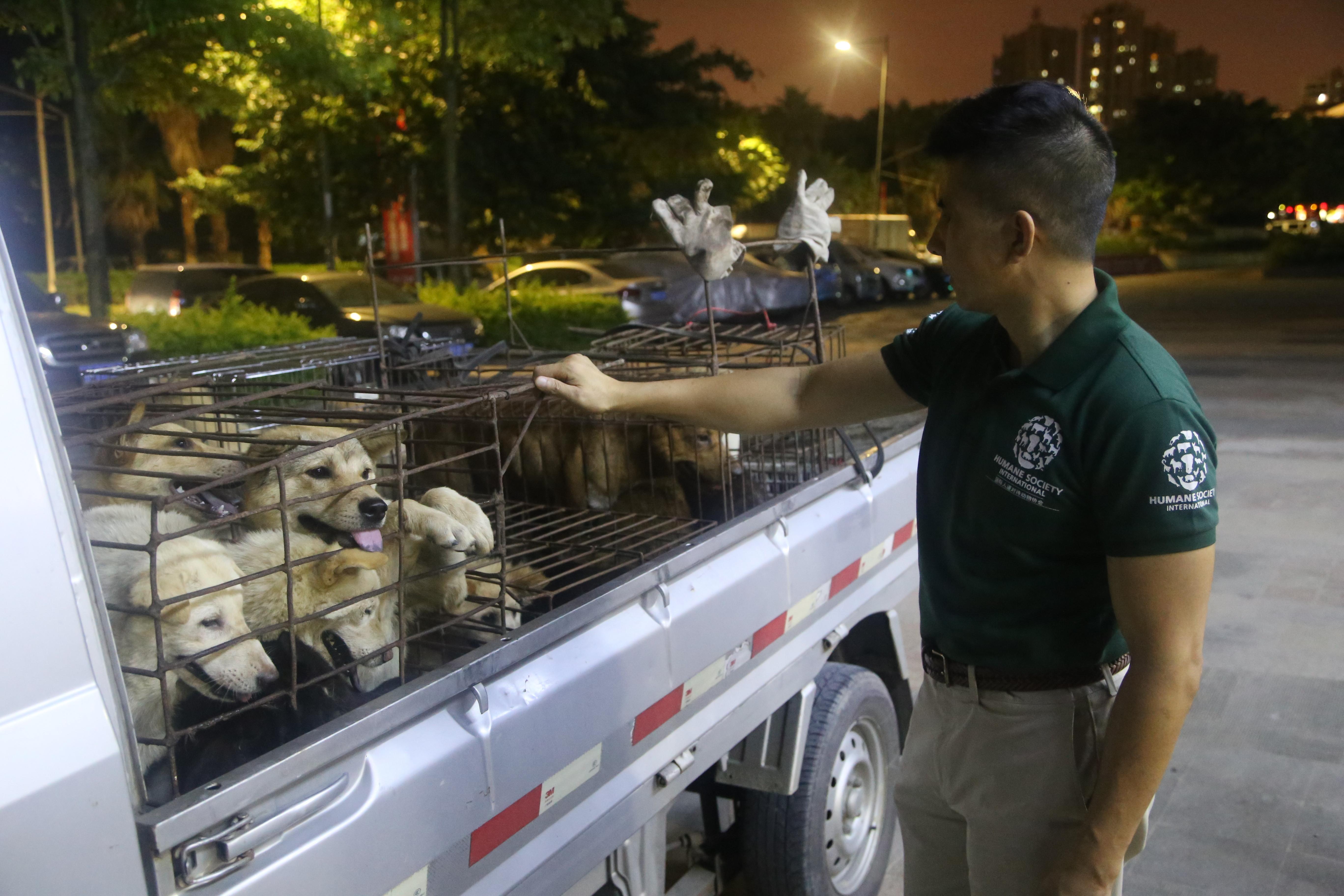 dogmeat yulin