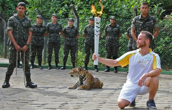 jaguar bresil