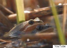La petite grenouille qui tient tête aux promoteurs