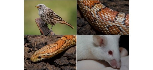 On sait désormais que poils, plumes et écailles ont tous la même origine