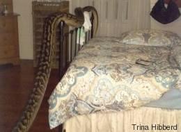 Elle est réveillée en pleine nuit par un serpent de 5 mètres (VIDÉO)