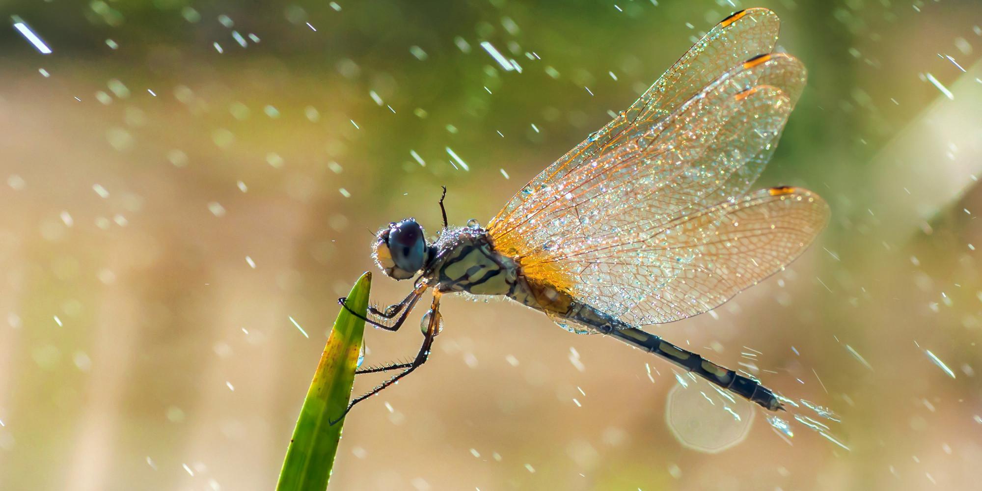 Dragonfly Desktop App ώ ό ό ή ί ά