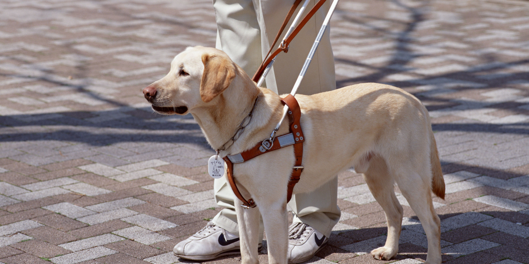 A Dog S Purpose Parents Guide