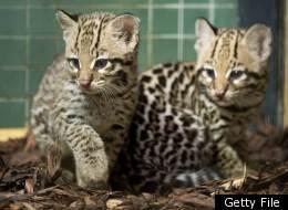 PHOTOS: Google's 10 Most Popular Rare Wild Animals In 2011