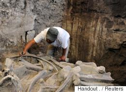 Un mammouth vieux de 14 000 ans exhumé au Mexique