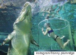 물 속에서 악어와 놀고 싶다면, 호주로 가야한다(사진, 동영상)