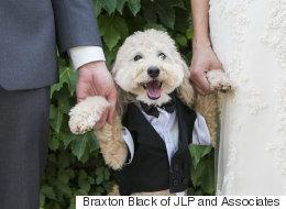 25 photos adorables de chiens assistant au mariage de leurs maîtres
